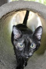 IMG_14052 (mudsharkalex) Tags: california tracy tracyca cat cats kitty kitties kitten kittens gato pepa