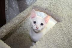 IMG_14046 (mudsharkalex) Tags: california tracy tracyca cat cats kitty kitties kitten kittens gato salt