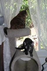 IMG_14045 (mudsharkalex) Tags: california tracy tracyca cat cats kitty kitties kitten kittens gato cali pepa