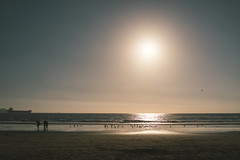 moments after (M///S///H) Tags: 35mm ps rx1 afternoonlight beach birds chile coquimbo eclipseday july22019 july2nd2019 pointandshoot sony sonyrx1 sunset