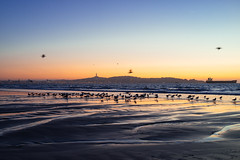 A Coquimbo Sunset (M///S///H) Tags: 35mm ps rx1 afternoonlight beach birbs birds chile coquimbo cross eclipseday flight flowing july22019 july2nd2019 pointandshoot sealifemseabirds slowshutter sony sonyrx1 sunset water