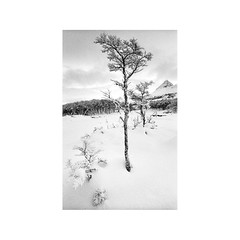 (Ariel Villegas) Tags: fomapan200 35mm hc110 leitz superangulon34 tierradelfuego nieve snow patagonia travel landscape