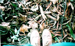 Leaves. (~ Fijke Mogen ~) Tags: shoes oxfordshoes oxford leaves autumn otoño nature natural naturephotography analog analogphotography analogue analogicphotography zenitb zenit analogphoto film filmphotography 35mmfilm 35mm