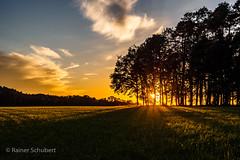 Schatten (rschubert98) Tags: olympus baum nature sonnenuntergang wolken herzogenaurach clouds mzuiko124028pro naturephotography sommer abendlicht summer sunset