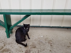 2019-07-07 14.56.17 (littlereview) Tags: southmountain maryland frederick 2019 littlereview summer southmountaincreamery farm animal cat blog