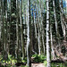 Inner Basin Trail, Coconino National Forest