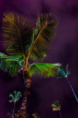Purple nights (Taomeister) Tags: nikoncoolpixa bavaropuntacana dominicanrepublic
