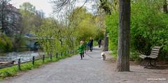 meisjehond20100416034 (joepdeumes) Tags: hond meisje park