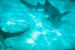 Snorkel Excursion (Taomeister) Tags: ektar100 nikonosv wnikkor35mmf25 kodakektar100 bavaropuntacana dominicanrepublic