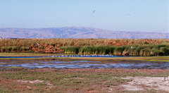 Palo Alto Baylands Nature Preserve (trphotoguy) Tags: fujichrome velvia100 rvp100 film nikonf6 afmicronikkor105mmf28 paloaltobaylandsnaturepreserve