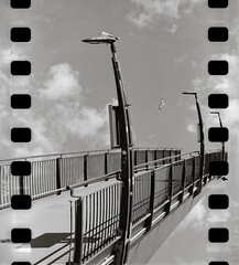 In to the sky (Geir Bakken) Tags: seagull bridge sky clouds rolleirpx rolleirpx25 yashica yashica44 35mmfilm tlr blackandwhite film filmisnotdead filmphotography filmcamera ilovefilm analog analogue analogphotography perfectbeauty bw mediumformat sprocket