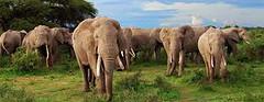 Best Tanzania safari packages (ciroferrara480) Tags: best tanzania safari packages kenya safaris from nairobi