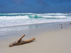 Log on the beach (2) (Teelicht) Tags: brandung california kalifornien küste montereycounty nordamerika northamerica ozean pacificgrove pacificocean pazifik usa unitedstatesofamerica vereinigtestaaten coast ocean surf treibholz driftwood log