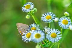 On Tour (*Capture the Moment*) Tags: 2019 butterfly clouds farbdominanz fotowalk friaul himmel landscape landschaft natur nature schmetterling sky sonya7m2 sonya7mii sonya7mark2 sonya7ii sonyfe2890macrogoss wetter wolken cloudy green grün wolkig