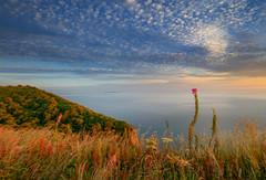 """ NOT ~ H.Q "" (Wiffsmiff23) Tags: devon coastline coast dramatic epic hike trek golden gold"