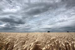 Corn Field (Mondialus P) Tags: cornfield kornfeld landschaft landscape austria loweraustria sky summer