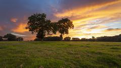 Sky Saw (snomanda) Tags: sky sunset light twilight dusk sundown redsky tree trees landscape pasture field nature horizon clouds farm farmland rural countryside evening summer