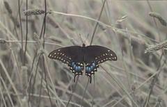Papillon (cristi56600) Tags: allemagne papillon animaux