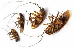 Bed Bug Control Services Mississauga (ozzlynnvince) Tags: bed bug control mississauga