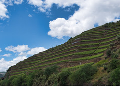 Take the first step (Wicked Dark Photography) Tags: dourovalley europe landscape portugal clouds grapevines river rivervalley sky terracefarming terraces travel vacation vineyard