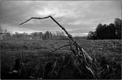 Überslandschauer (jo.sa.) Tags: landschaft lebensraum analog analogefotografie schwarzweiss schwarzweissfotografie bw sw kleinbild ast wiese feld
