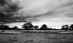 Farming (graemes83) Tags: farm field agriculture rural trees tractor grass sky cloudy blackandwhite monochrome