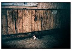 (schlomo jawotnik) Tags: 2019 juni kleinflöthe katze schlomostierwelt katzeklo reiterhof ponyhof wand fehlbelichtung kodak kodakproimage100 film analog usw