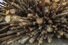 Still Life (tmeallen) Tags: logsortyard clearcut deadtrees loggilng wideangle starburst morsebyisland coastalbc haidagwaii queencharlotteislands pacificnorthwest britishcolumbia