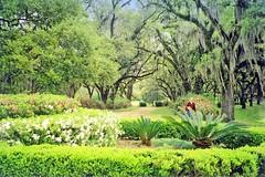 USA-La Louisiane, les arbres et fleurs du Parc à Tabasco (Roger-11-Narbonne) Tags: oiseaux usa mississippi fleuve eau maison paysage tabasco lac sel étang louisiane fleurs