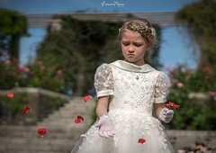 Do not watch the petals fall from the rose with sadness, know that, like life, things sometimes must fade, before they can bloom again. ~Unknown~ (Lorrainemorris) Tags: red portrait sun rose zeiss petals colours child dress sony communion zeissbatis85 sony7rm2 ireland dublin torns childportrait lorrainemorris