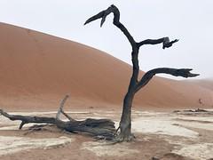 Sossusvlei - Namib Desert - Nabimia (As minhas andanças) Tags: sossusvlei namibia namibdesertnamibnaukluftnationalpark