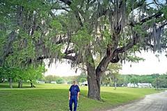 USA-La Louisiane, les chênes charger de mousse espagnole à Tabasco (Roger-11-Narbonne) Tags: oiseaux usa mississippi fleuve eau maison paysage sauce tabasco lac sel étang louisiane chêne mousse