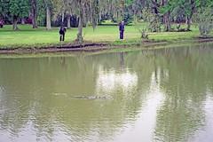 USA-La Louisiane, dans l'étang de Tabasco un alligator passe (Roger-11-Narbonne) Tags: oiseaux usa mississippi fleuve eau maison paysage sauce tabasco lac sel étang louisiane alligator