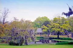 USA-La Louisiane, étang et chênes du Parc de Tabasco (Roger-11-Narbonne) Tags: oiseaux usa mississippi fleuve eau maison paysage sauce tabasco lac sel étang louisiane arbre chêne mousse