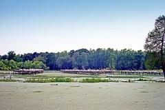 USA-La Louisiane, le Parc de Tabasco avec les oiseaux (Roger-11-Narbonne) Tags: oiseaux usa mississippi fleuve eau maison paysage sauce tabasco lac sel étang louisiane
