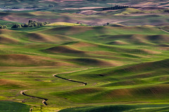 Evening in the Palouse (trochford) Tags: fields countryside hills rolling barn redbarn spring green wheat furrows evening scenic landscape steptoebutte palouse washington inlandnorthwest us usa unitedstates canon canon6d ef70200mmf4lisusm ef70200 ef14xiiiextender