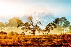 On how to find a sunrise (lunacornata) Tags: 35mm film filmisalive analog analogue analogica analogico analoga analogo landscape nature naturescape double doubleexpo kodak