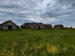 Abandoned Farm In The Vast Alberta Canola Fields (TheNovaScotian1991) Tags: alberta canada rapeseed canola yellowfields flowers googlepixel3xl crops