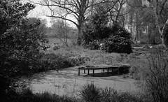 Silent pond (Rosenthal Photography) Tags: asa400 kleinbildformat ilfordlc2912920°c9min ff135 analog ilfordhp5 epsonv800 olympustrip35 schwarzweiss frühling ilfordrapidfixer 35mm sommer 20190601 silentpond pond water silent landscape trees meadow mood summer june spring blackandwhite olympus olympus35 trip trip35 dzuiko zuiko 40mm f28 ilford hp5 hp5plus lc29 129 14 rapid fixer epson v800