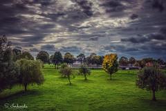 Autumn Sadness (Stathis Iordanidis) Tags: autumn sadness amazinglandscape trees countryside dramaticsky dramaticclouds grass grassland millingen netherlands