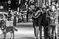 The curious dog watching human behavior. (Capitancapitan) Tags: dog curious neury luciano instagram iphone facebook youtube music rock pop street photography black white manhattan asia north america urim y tumim el mundo gira artist