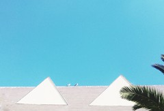 We flew to see the pyramids. (Rusnius) Tags: ontheroof rooftop triangles pyramids seagulls mew palm palmtree palmleaf palmleaves minimal minimalism minimalistic minimalmood concon chile southamerica centralchile lgg4 phonephotography phonegraphy mobilography architecture architecturaldetails architecturedetail urban urbanexploration birds