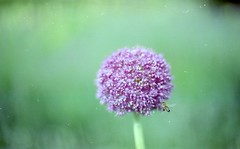 Bee (Alice_argentique) Tags: cinestill50 canon canona1 filmisnotdead filmisalive filmphotography outdoorphotography ishootfilm femalephotographer
