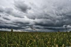 Kornfeld (JuergenThiele) Tags: harzvorland kornfeld wolken