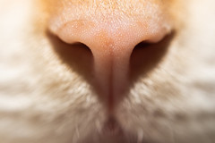 DSC_0594-1-2.jpg (CloserLuc) Tags: curiosity blur domestic little cat skin nose kitten animal looking young wildlife fur love pet funny sit portrait macro dof eye indoors cute hair