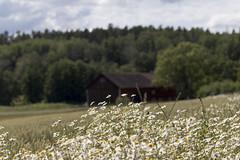 Kalvsviksladan (Steffe) Tags: summer barn sweden haninge lada österhaninge kalvsvik kalvsviksladan