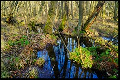 Blauer Himmel. ... the blue Sky (tingel79) Tags: reflection water wasser see sea moor moos wald forest natur nature outdoor germany frühling photography photographie photograph day blauundgrün blau sonnig sunshine sony sonya6500 sky himmel world