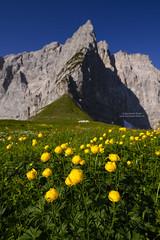 Summer flowers at Hohljoch, Karwendel (Bernhard_Thum) Tags: bernhardthum dreizinkenspitze hohljoch karwendel thum nikonz7 zf zf2 nature milvust2818 distagonmilvus1828zf carlzeiss