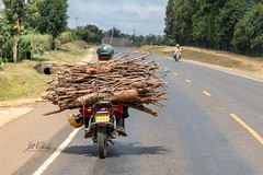 Transportation in Kenya (Jill Clardy) Tags: africa kenya vantagetravel safari nyeri centralprovince 201902129l8a4731 motorcycle highway nairobi twigs wood firewood transport transportation explore explored