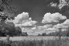 schapenpark Odoorn (Jos Mecklenfeld) Tags: forest wald bos nature natur natuur schapenparkodoorn sonya6000 sonyilce6000 sonyepz1650mm selp1650 niederlande landscape landschaft landschap nederland monochrome bw pad path pfad odoorn drenthe netherlands